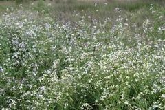 Lösa blommor med defocused bakgrund Arkivfoto