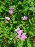 Lösa blommor, nätta rosa blommor fotografering för bildbyråer