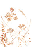 Lösa blommor och gräs på vit Royaltyfri Bild