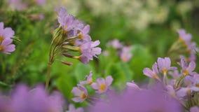 Lösa blommor och växter blommar wild Färgrika blommor på fältet Vildblommor bland gräs och lösa blommor stänger sig upp stock video