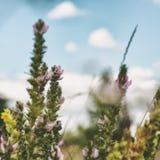Lösa blommor på ängen Royaltyfri Foto