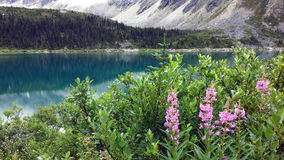 Lösa blommor på övreDewey Lake, Alaska Arkivfoto