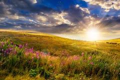 Lösa blommor på bergöverkanten på solnedgången royaltyfri bild