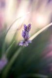 Lösa blommor på sommar Arkivbild