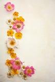 Lösa blommor som en ram Arkivfoton
