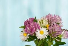 Lösa blommor stänger sig upp på blå bakgrund Royaltyfria Bilder