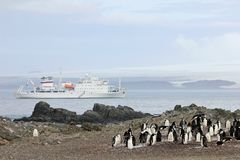 Lösa chinstrappingvin och kryssningskepp i bakgrunden, Antarktis Arkivbilder