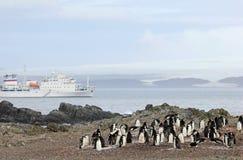 Lösa chinstrappingvin och kryssningskepp i bakgrunden, Antarktis Royaltyfri Fotografi