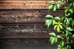Lösa druvor mot en wood bakgrund royaltyfria foton