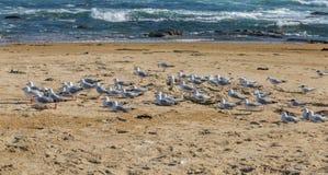 Lösa duvor på stranden med havet i bakgrund Royaltyfri Foto