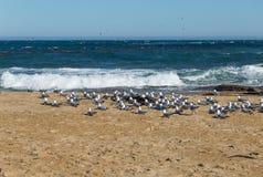 Lösa duvor på stranden med havet i bakgrund Fotografering för Bildbyråer