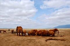 Lösa elefanter på öknen Royaltyfri Fotografi
