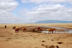 Lösa elefanter på öknen Arkivfoton