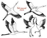 Lösa fåglar i flykten Djur i natur eller i himlen Kranar eller Grus och stork eller shadoof och Ciconia med vingar royaltyfri illustrationer