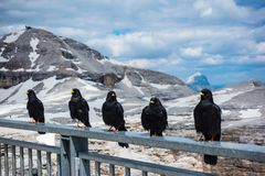 Lösa fåglar ställer upp på ledstången med bakgrunden av Passo royaltyfri fotografi