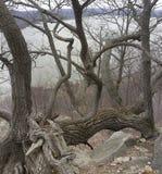 Lösa former för trädfilial royaltyfri foto