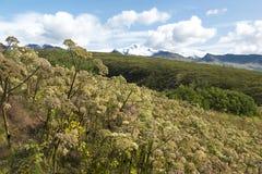 Lösa gräs och berg i den Skaftafell nationalparken, Island Arkivfoto