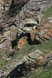 Lösa gräs och blommor växer på den atlantiska kusten i Brittany (Frankrike) Arkivbilder