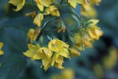 Lösa gulingkoppar i en liten stad parkerar Royaltyfri Foto