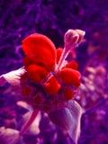 Lösa härliga tryck för konst för makrobakgrundstapet royaltyfri foto