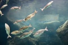Lösa havsfiskar i Cretaquarium royaltyfria bilder
