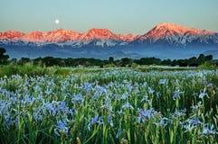 Lösa Iris Mountains And Moonset Royaltyfria Foton