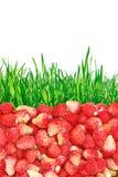 Lösa jordgubbar och gräs som isoleras på vit bakgrund. Arkivbild