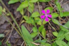Lösa lilor blommar i skogslutet upp Arkivfoton