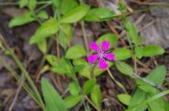 Lösa lilor blommar i skogslutet upp Fotografering för Bildbyråer