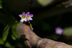 Lösa lilor blommar med ettformat diagram i mitten Fotografering för Bildbyråer