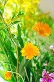 Lösa medicinska blommor Närbild selektiv fokus royaltyfri foto