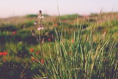 Lösa naturanemoner med gräslökar Fotografering för Bildbyråer