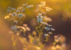 Lösa naturblommor Royaltyfri Fotografi