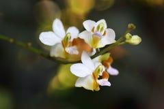 Lösa orkidér Arkivbilder