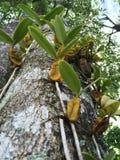 Lösa orkidér på trädet royaltyfri fotografi