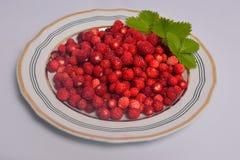 Lösa stravberries på plattan Arkivfoto