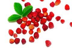 Lösa strawberrys med sidor bakgrund isolerad white Royaltyfria Bilder