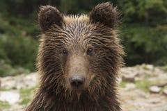Lösa Teddy Bear Portrait Arkivbild