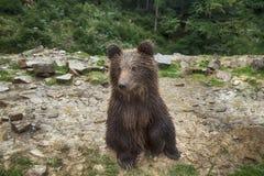 Lösa Teddy Bear Sits på hans Fanny Royaltyfria Bilder