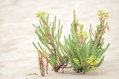 Lösa växter i sanden royaltyfria foton