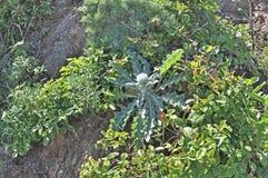 Lösa vårblommor - kaktus Arkivfoton