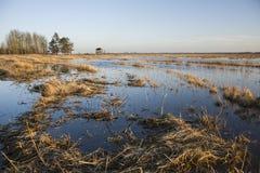 Lösa våtmarker i Polen royaltyfria bilder