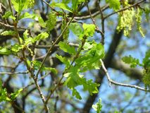 Lösen Sie die Blätter von Bäumen im Vordergrund gegen einen Hintergrund des blauen Himmels auf Lizenzfreies Stockbild