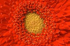 Lösen Sie sich in der Blume auf Stockbild