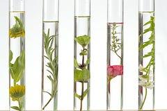 Lösning av medicinalväxten och blommor royaltyfria foton