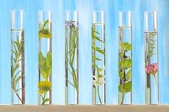 Lösning av medicinalväxten och blommor Royaltyfri Fotografi