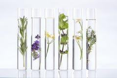 Lösning av medicinalväxter och blommor - arkivfoto