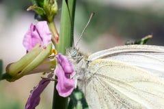 Löst änggräs och fjäril i vår i naturmakro Arkivfoton
