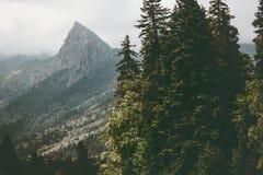 Löst barrskog- och berglandskap Arkivbilder