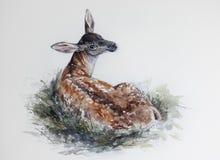 Löst behandla som ett barn hjortar i gräset Royaltyfria Foton